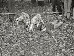 Dog Mart: 1937