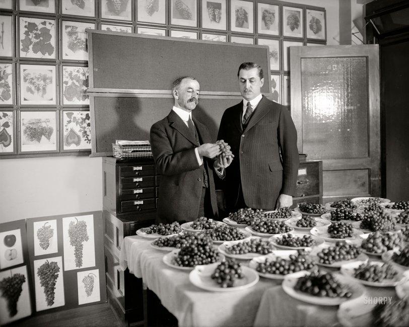 Plate Me a Grape: 1921