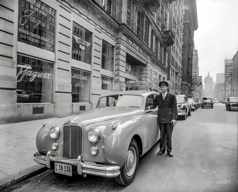 Park Avenue Cats: 1951
