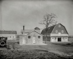 Chestnut Farms: 1925