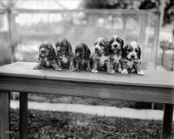 Pups in a Row: 1927
