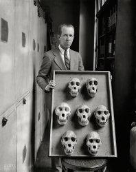 Seven Skulls: 1927