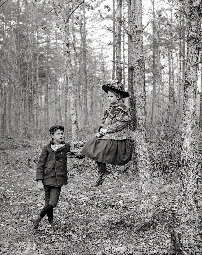Family Tree: 1895