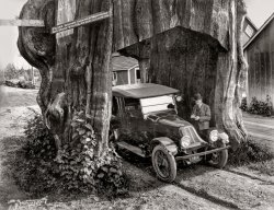 Alternate Root: 1920