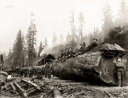 Big Log: 1905