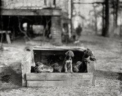 Dog Box: 1923