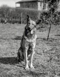 Crime Dog: 1923