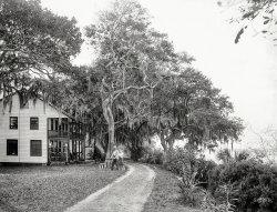 Bostrom's: 1890