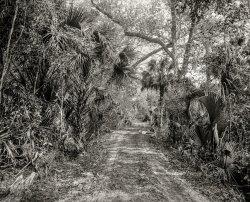 The Hammock Road: 1897