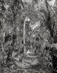 Wild Palms: 1897