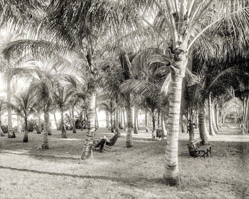Cocoanut Grove: 1896