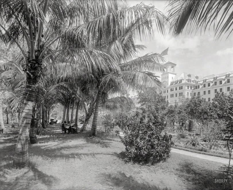 Coconut Alley: 1894