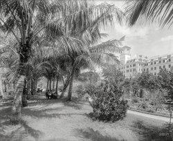 Coconut Alley: 1894