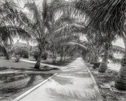 Palm Walk: 1897