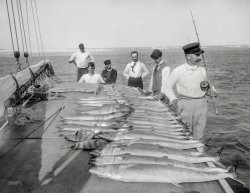 Catch of the Day: 1894