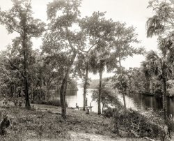 On the Tomoka: 1894