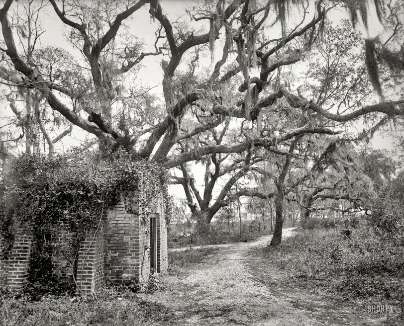 Chicora Park: 1901