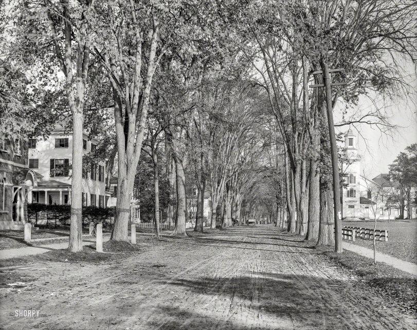 Hanover Under the Elms: 1900