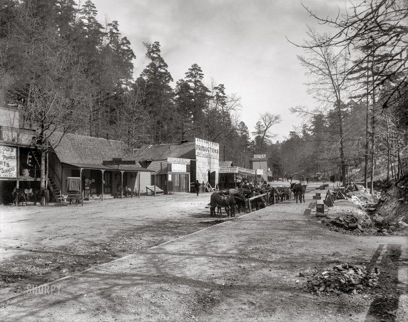 Gypsy Camp: 1901