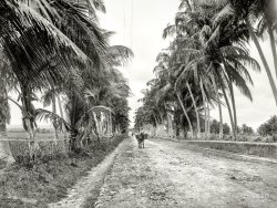 Military Road: 1901