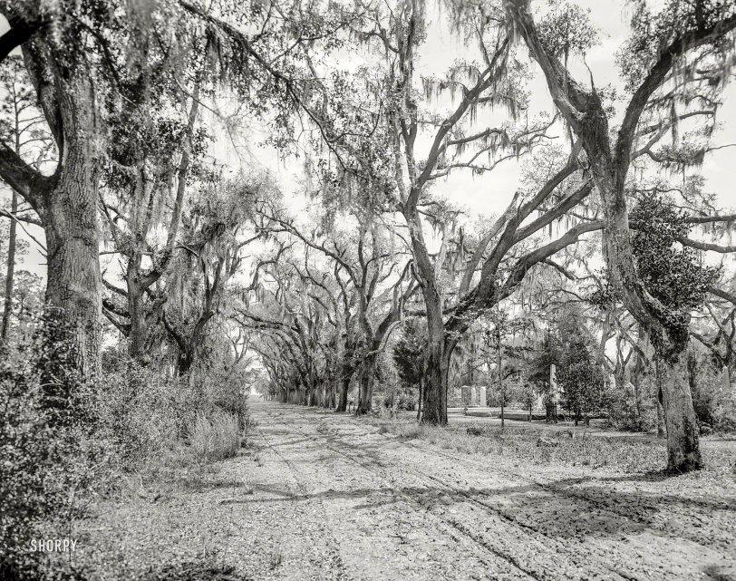 Bonaventure Cemetery: 1901