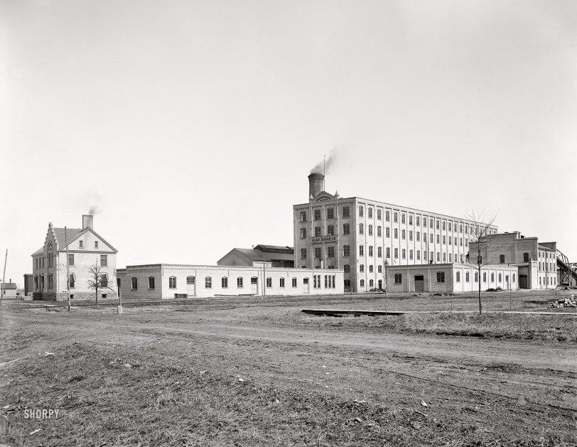 Alma Sugar: 1901