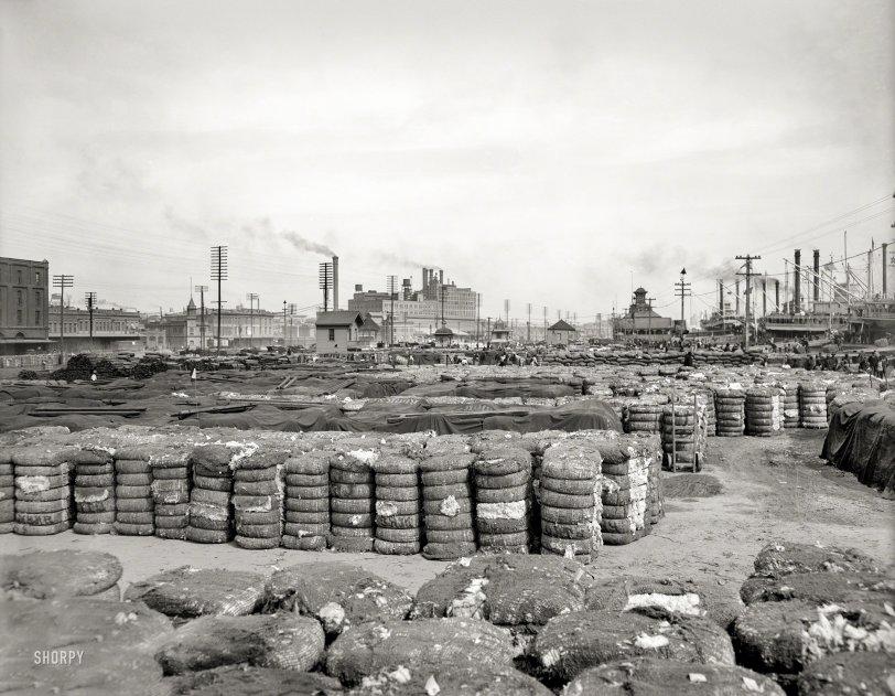High Fiber: 1903