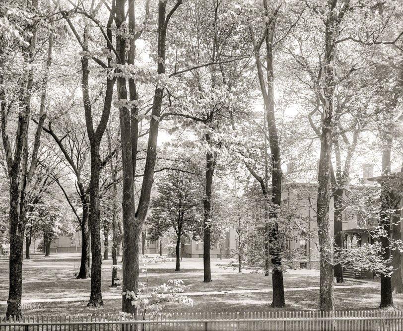 Bois de Bourgeois: 1906