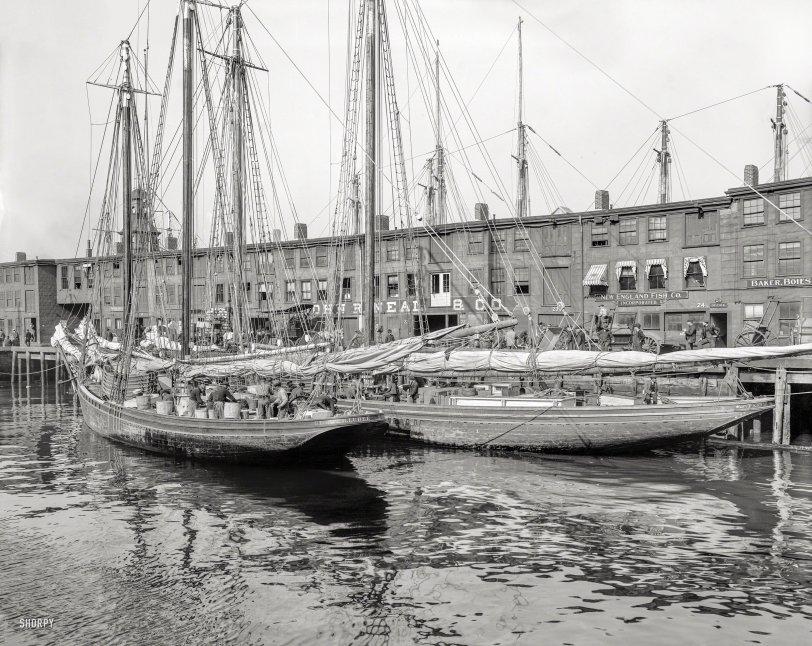 New England Fish Inc.: 1904