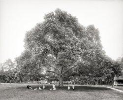 Family Tree: 1904