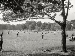 Field of Tweens: 1906