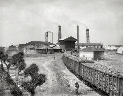 The Cane Train: 1904