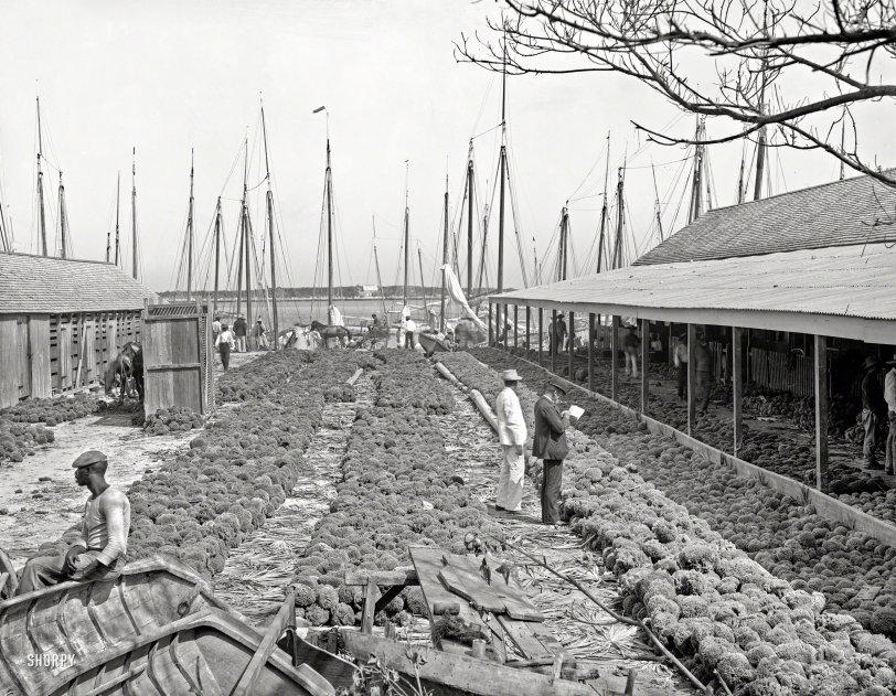 Porifera Aplenty: 1906