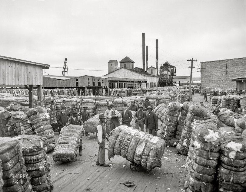 The Cotton Docks: 1905