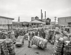 The Cotton Docks: 1905