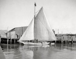 Cecil May: 1905
