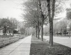 Street of Trees: 1904