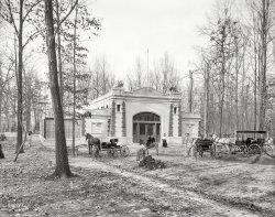 Carnivora: 1910