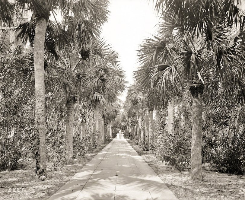 Avenue of Palms: 1905