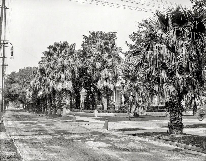 Palms Aplenty: 1910