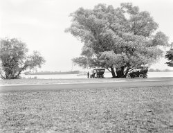 Tree Parking: 1910