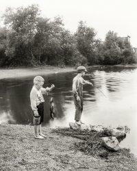 Little Fish: 1901