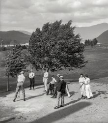 Blowing Tree: 1909