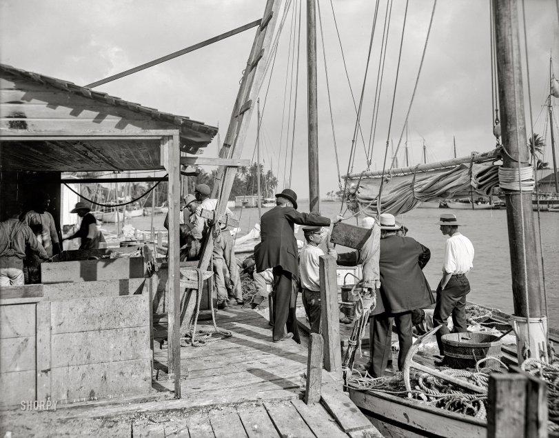 Old Miami River: 1900