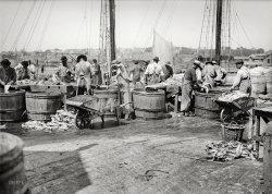 Fish in a Barrel: 1903