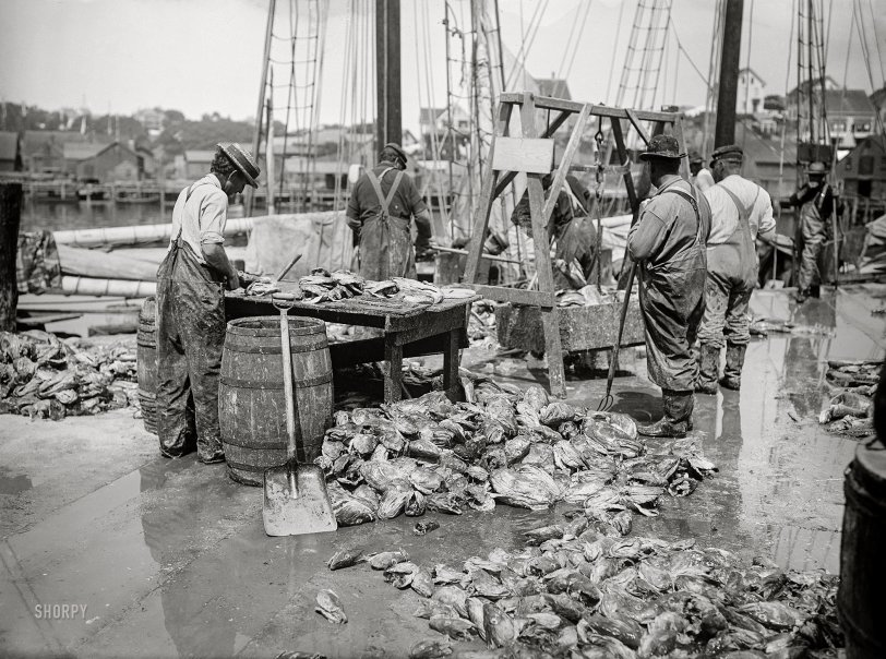 Cod and Man: 1905