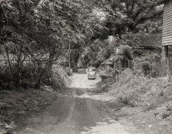 Shady Lane: 1953