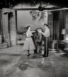 The Elephant in the Studio: 1954