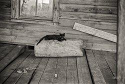 The Black Cat: 1936