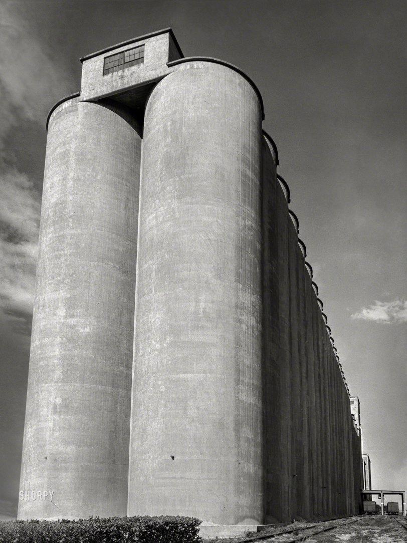 Tall Grain: 1939